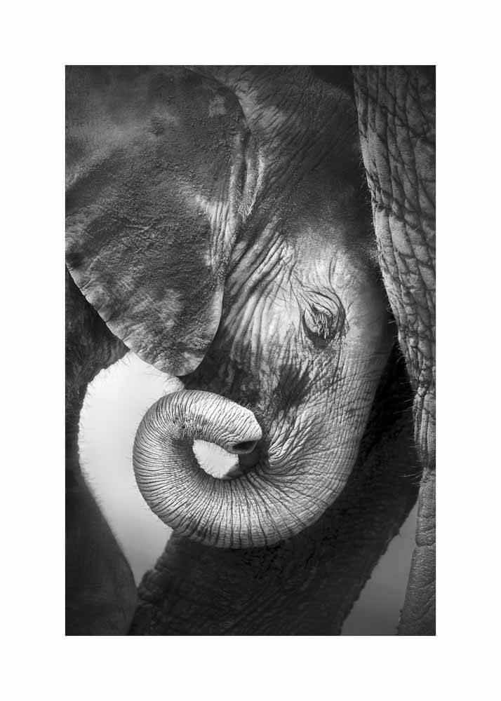 Małe Słoniątko, Plakat - 1